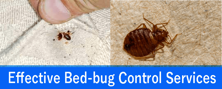 Effective Bed Bug Control Service