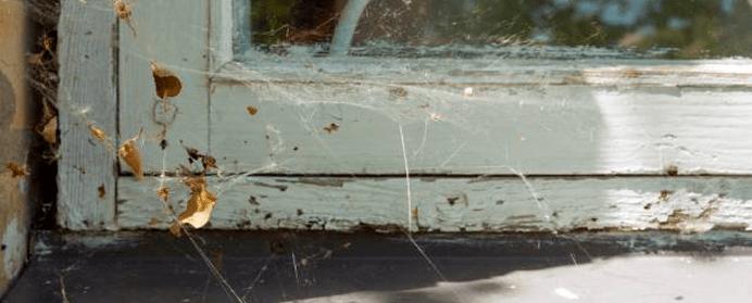 Professional spider control service
