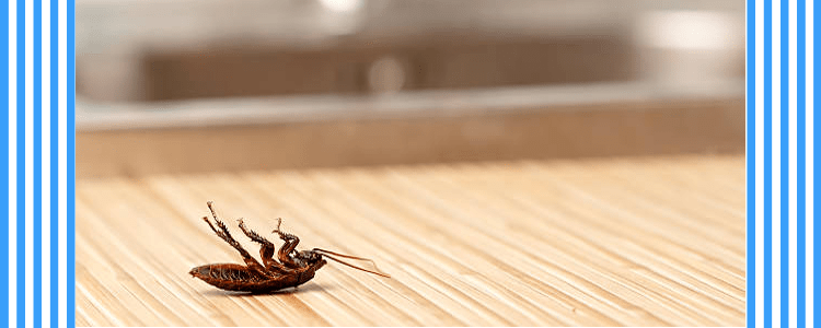 Professionals Cockroach Control Services
